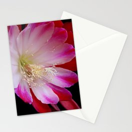 No Country Bumpkin Here Stationery Cards