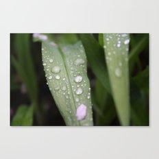 Grass After Rain Canvas Print