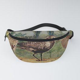 Vintage Print - Birds and Nature (1906) - American Golden Plover Fanny Pack