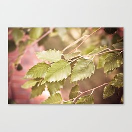 Golden Fall Leaves Canvas Print