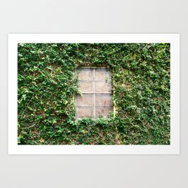 Window in the vines Art Print