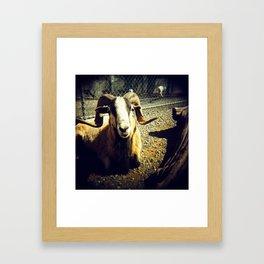 Goat? Framed Art Print