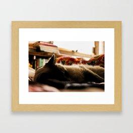 The Cat Framed Art Print
