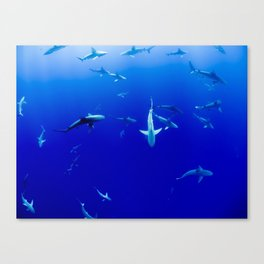 Sharks! Canvas Print