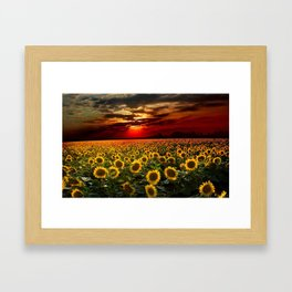 Sunflowers and Sunflower fields at sunset - Scituate, Rhode Island - Jeanpaul Ferro Framed Art Print