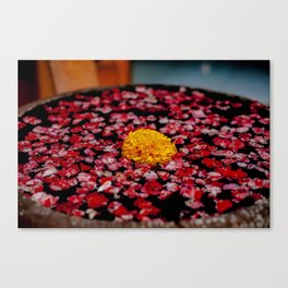 A Marigold In Indonesia Canvas Print