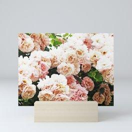 White climbing roses Mini Art Print
