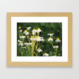Daisies Framed Art Print