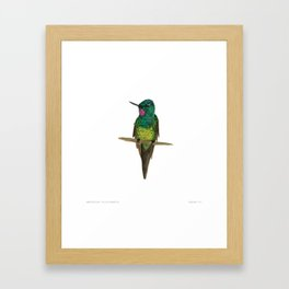 Empress Brilliant Framed Art Print