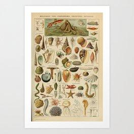 Adolphe Millot - Nouveau Larousse Illustré - Mollusques (Molluscs) (1910) Art Print