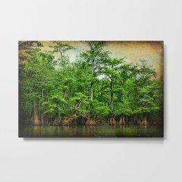 Cypress Trees along Parker's Lake Metal Print