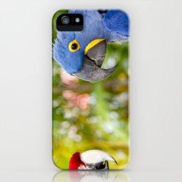Blue Hyacinth Macaw - Anodorhynchus hyacinthinus iPhone Case