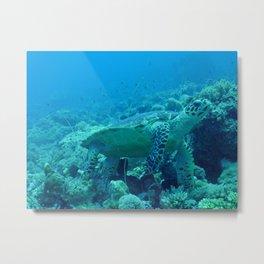 Marine turtle Metal Print