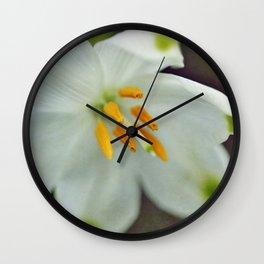 Galanthus nivalis 'Viridapice' Wall Clock