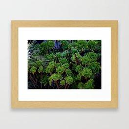 Succulent valley Framed Art Print