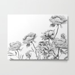black and white peonies 2 Metal Print