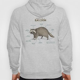 Anatomy of a Raccoon Hoody
