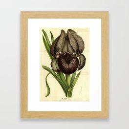Black Iris Framed Art Print