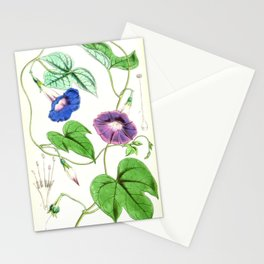 A Purging Pharbitis Vine in full blue and purple bloom - Vintage illsutration Stationery Cards