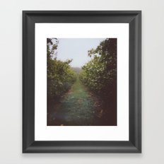 Orchard Row Framed Art Print