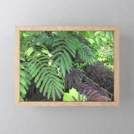 Mimosa tree Framed Mini Art Print