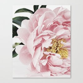 Peony, Flower, Pink, Plant, Trendy decor, Interior, Wall art, Photo Canvas Print