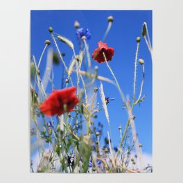 Poppies flower Poster