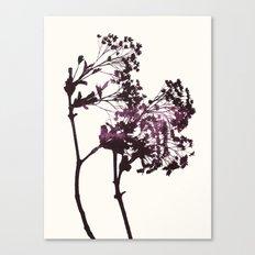 sugar maple 1 Canvas Print