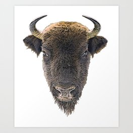 Bison Short Horns Long Face Hair Front View Mammal Art Print