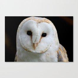 Barn Owl Canvas Print