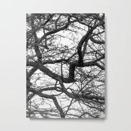 Black And White Hawthorne Tree Metal Print