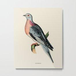 Pigeon Vintage Naturalist Illustration Metal Print