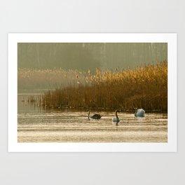 Lake of swans Art Print