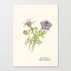 Nigella Hispanica Canvas Print
