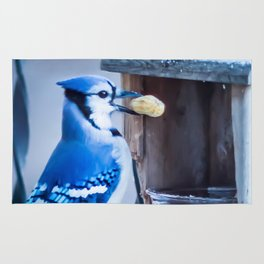 Blue Jay and the nuts Rug