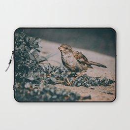 Summer Sparrow. Bird Photograph Laptop Sleeve