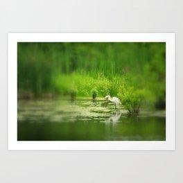 Marsh Egret 2 Art Print