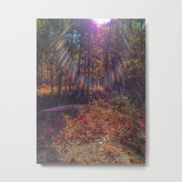 Pinelands Glimmer Metal Print