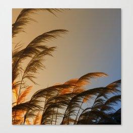 Sunset in autumn. Pampa grass Canvas Print