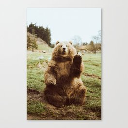Hi Bear Canvas Print