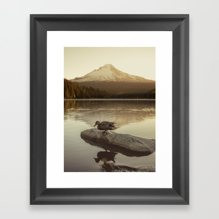 The Oregon Duck Gerahmter Kunstdruck