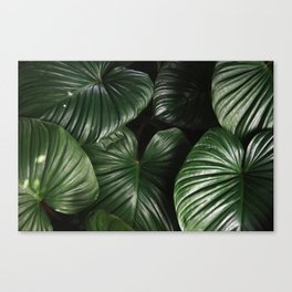 Botanical Luxe Canvas Print