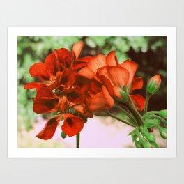 Burnt Orange Flowers Art Print