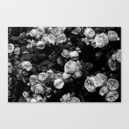 Roses are black and white Canvas Print