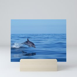 Spotted dolphin jumping in the Atlantic ocean Mini Art Print