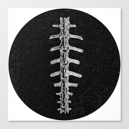 X-ray Spine. Canvas Print