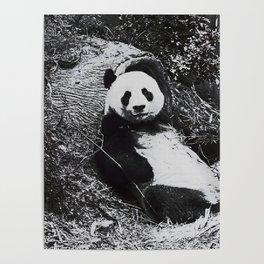 Urban Pop Art Panda Poster