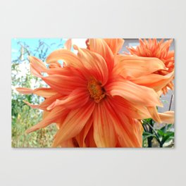 Late Bloom Canvas Print