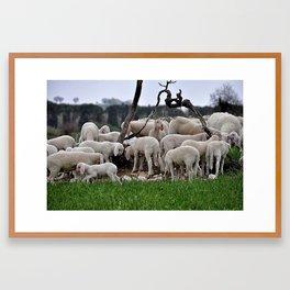 Sheep 2 Framed Art Print