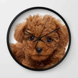 Little Brown Toy Poodle Wall Clock